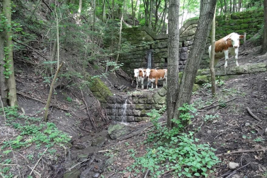Gemeinde Breitenstein: Wildbachbegehungen und Überwachung der zugehörigen Schutzbauwerke 2016