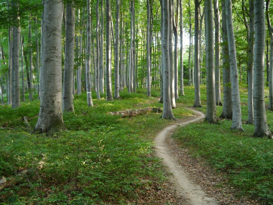 Mountainbike-Trails-Weidlingbach, Planung und Behördenverfahren